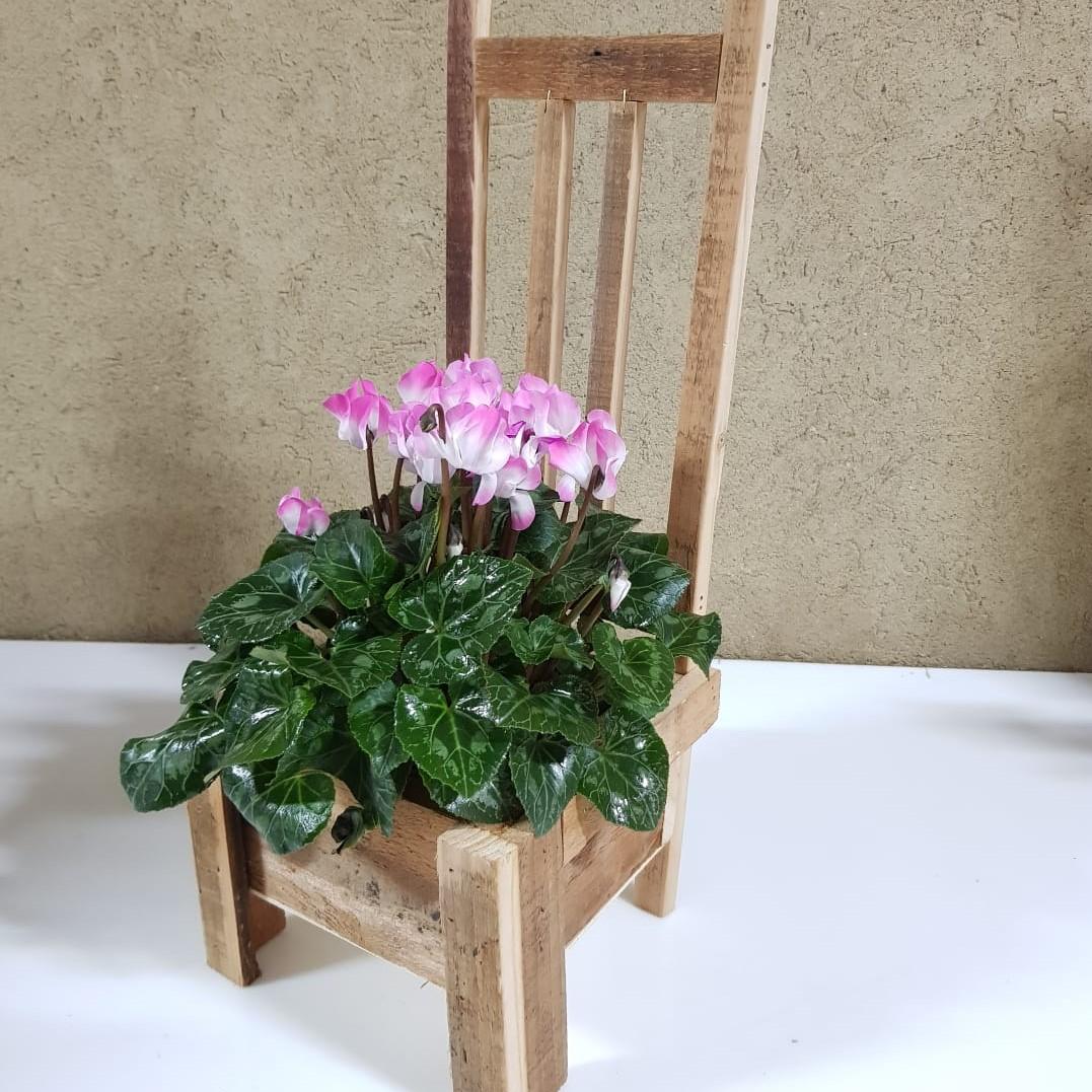 רקפת בכיסא עץ