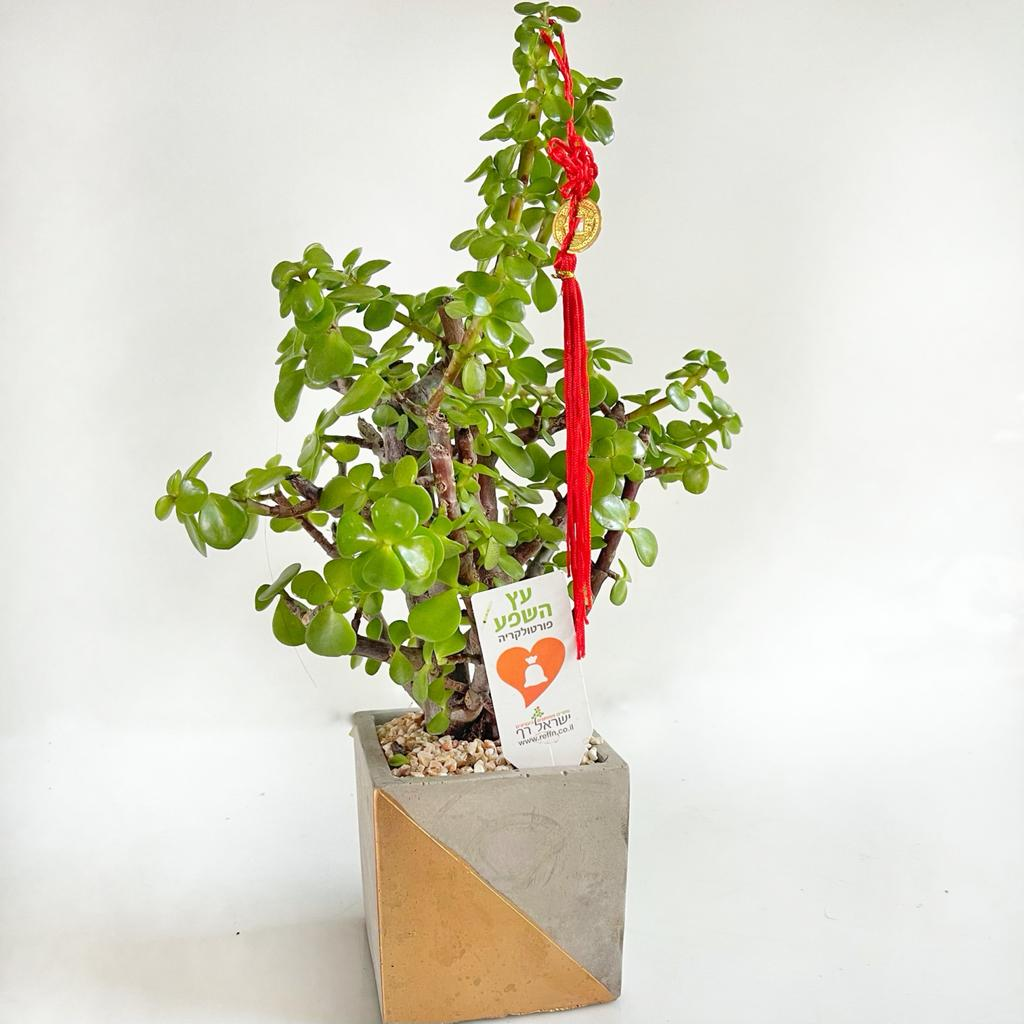 עץ השפע (מגיע בכלי לבן)