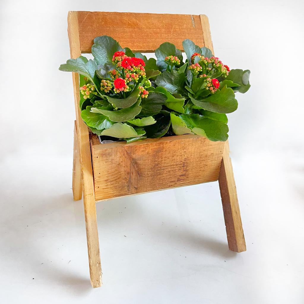 זוג ניצניות בכלי עץ מיוחד